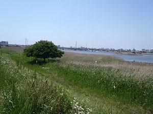 葦原と干潟