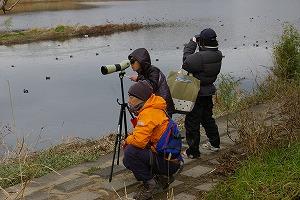 『野鳥観察