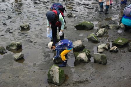 河口干潟観察会