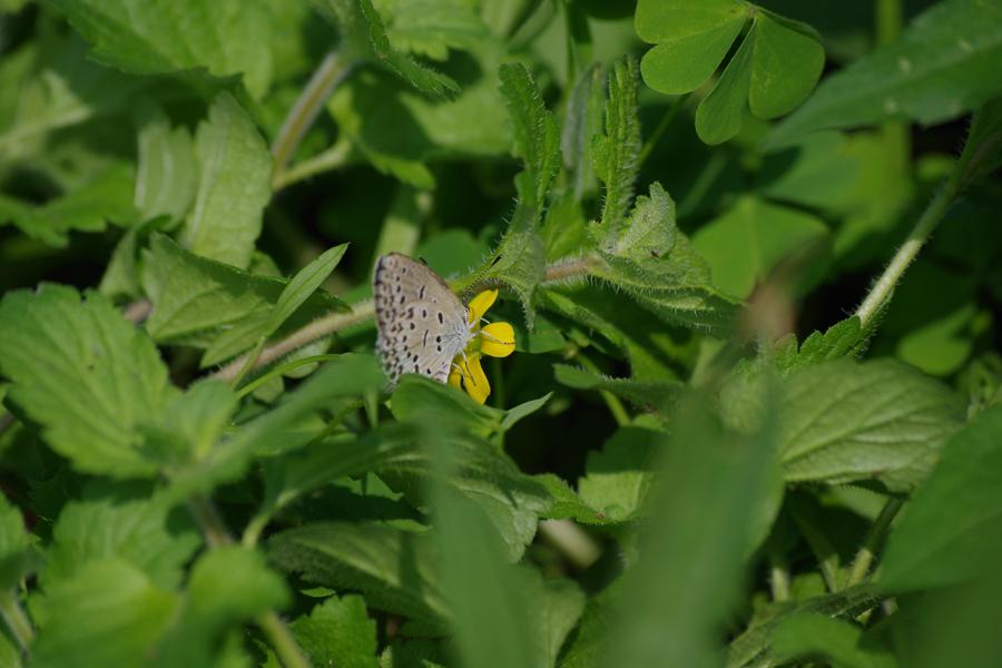 『昆虫観察』