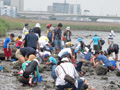 2011年6月5日 河口干潟観察会の様子へ